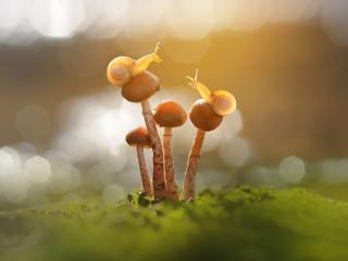 Snail and Mushroom Photography wallpaper