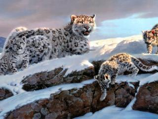 Snow Leopard Winter 4K wallpaper