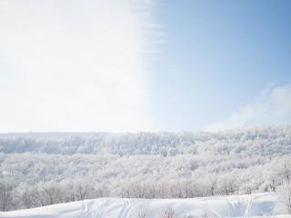 snow, trees, sky wallpaper