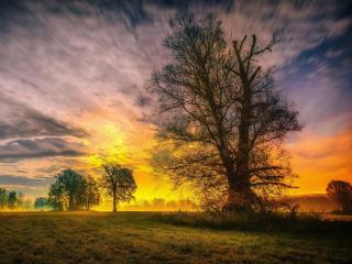 Spring Trees and Sunset wallpaper