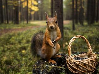 squirrel, grass, shopping wallpaper