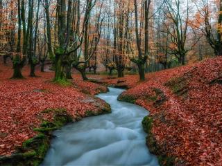 Stream Forest wallpaper