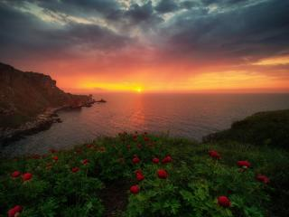 Sunrise Nature Horizon wallpaper