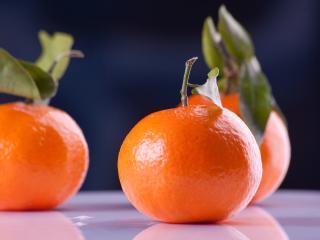 tangerines, fruit, branch wallpaper