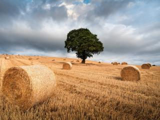 The Tree and Haystack Field wallpaper