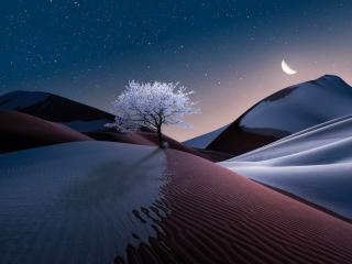 The Tree in Dune wallpaper