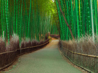 thickets, bamboo, pathway wallpaper
