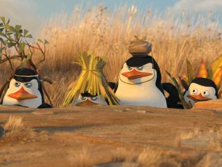 This Penguins Of Madagascar Hilarious Wallpapers wallpaper