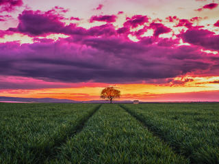 Tree in The Field wallpaper