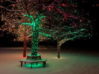 tree, lights, night wallpaper