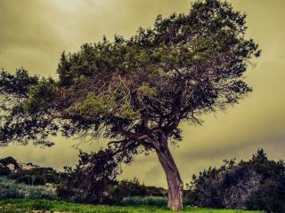 tree, meadow, summer wallpaper