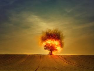Tree On Fire wallpaper