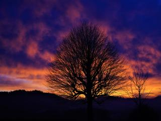 HD Wallpaper | Background Image Tree Silhouette In Winter Sunset