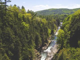 trees, creek, river wallpaper