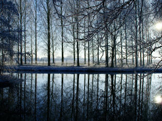 trees, forest, reflection wallpaper