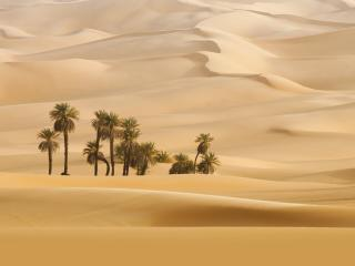 Trees In Desert Dune Photography wallpaper