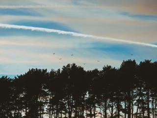 trees, sky, evening wallpaper