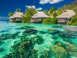 tropics, palm trees, ocean wallpaper