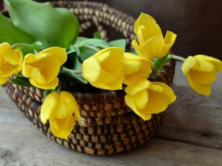 tulip, basket, flowers wallpaper