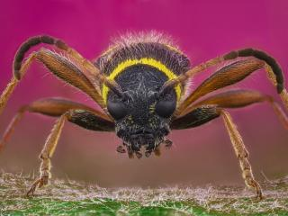 Wasp Insect Close-Up wallpaper