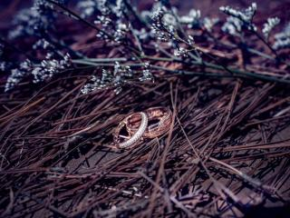 wedding rings, branches, flowers wallpaper