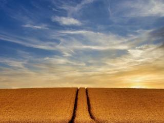 Wheat 4k Farm Field wallpaper