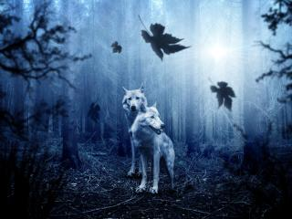 HD Wallpaper | Background Image White Wolf In Forest