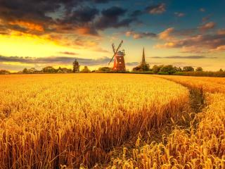 Windmill on Wheat Field at Sunset wallpaper
