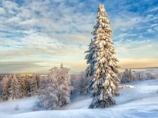 Winter Landscape with Snow Covered Trees wallpaper