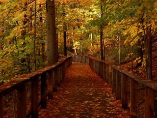 Wood Bridge Forest in Fall wallpaper