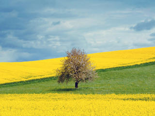 HD Wallpaper | Background Image Yellow Flower Field