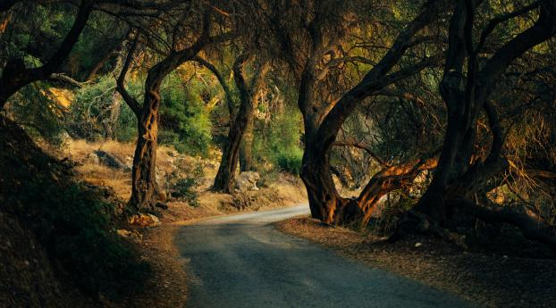 4K Forest Road HD Photography Wallpaper