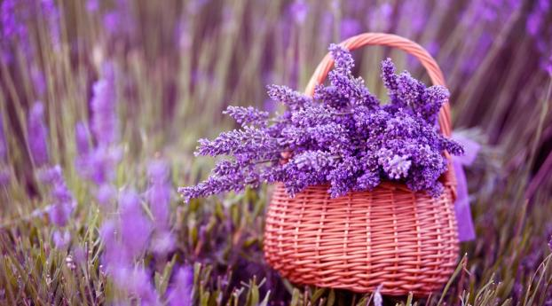 1336x768 Basket Of Lavender Purple Flower Hd Laptop Wallpaper Hd Flowers 4k Wallpapers Images Photos And Background