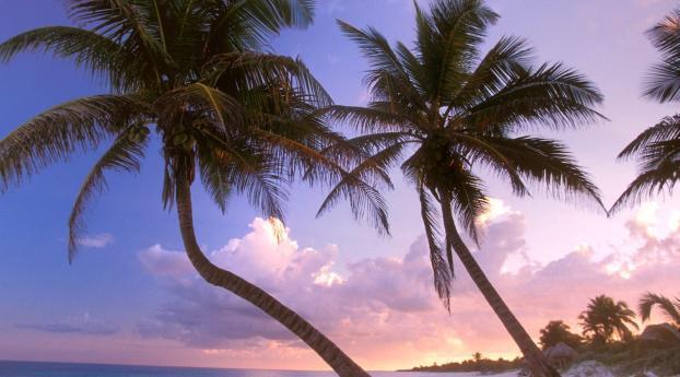 1125x2436 Beach Palm Trees Sand Iphone Xs Iphone 10 Iphone