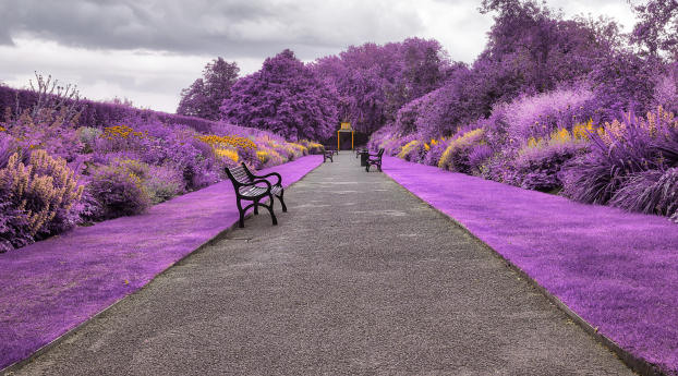 HD Wallpaper | Background Image Belfast Botanic Gardens in Northern Ireland