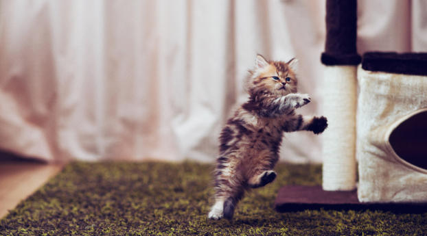 2560x1024 Cat Jumping Portrait 2560x1024 Resolution Wallpaper Hd Animals 4k Wallpapers Images Photos And Background
