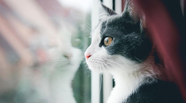 cat, window, reflection Wallpaper