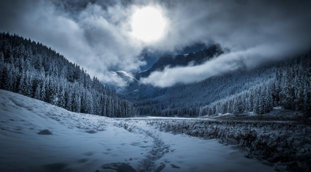 Dramatic Winter Twilight in Forest Wallpaper