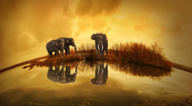 HD Wallpaper | Background Image Elephants Wildlife River Thailand