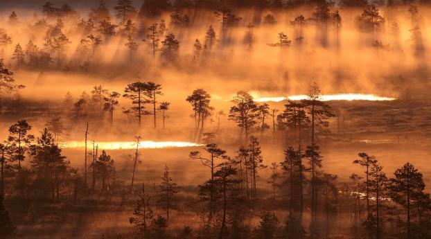 Fogy Sunrise Wallpaper