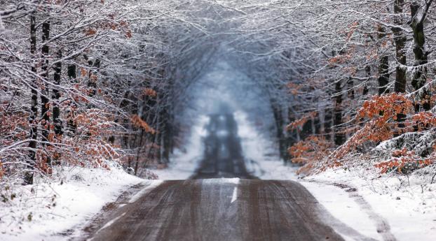 Forest Road in Winter Wallpaper