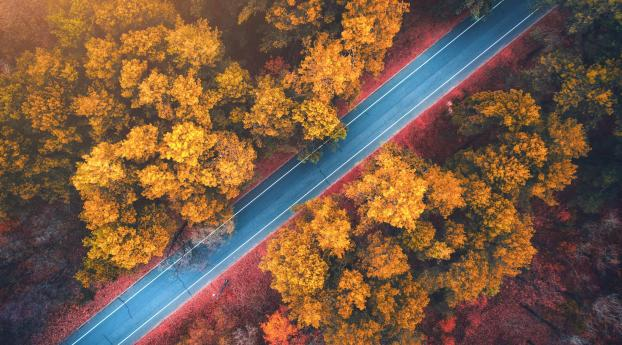 Forest Road Photography Aerial 4k Wallpaper 1024x768 Resolution