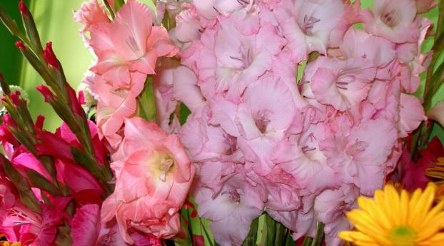 1125x2436 Gladiolus Flowers Different Iphone Xs Iphone 10