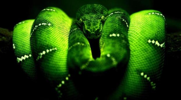 Green Python HD Razer Wallpaper