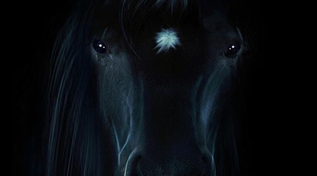 HD Wallpaper | Background Image Horse Portrait