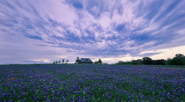 HD Wallpaper | Background Image House In Purple Flower Hyacinth Field