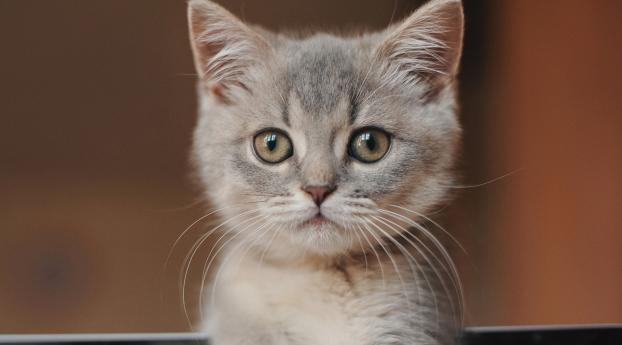 Kitten Cute Wallpaper 640x960 Resolution
