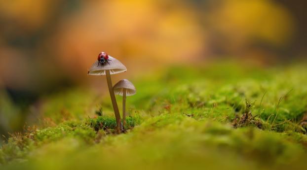 Ladybug On Mushroom Wallpaper in 1125x2436 Resolution