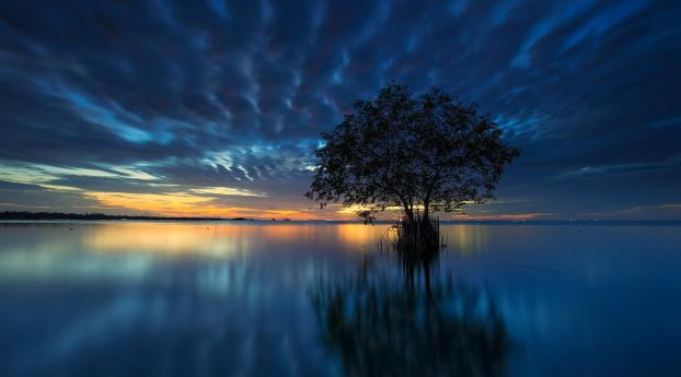 HD Wallpaper | Background Image Lake Tree