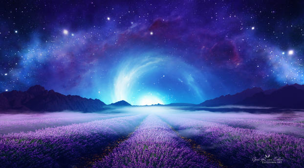 Lavender Field at Starry Night Wallpaper